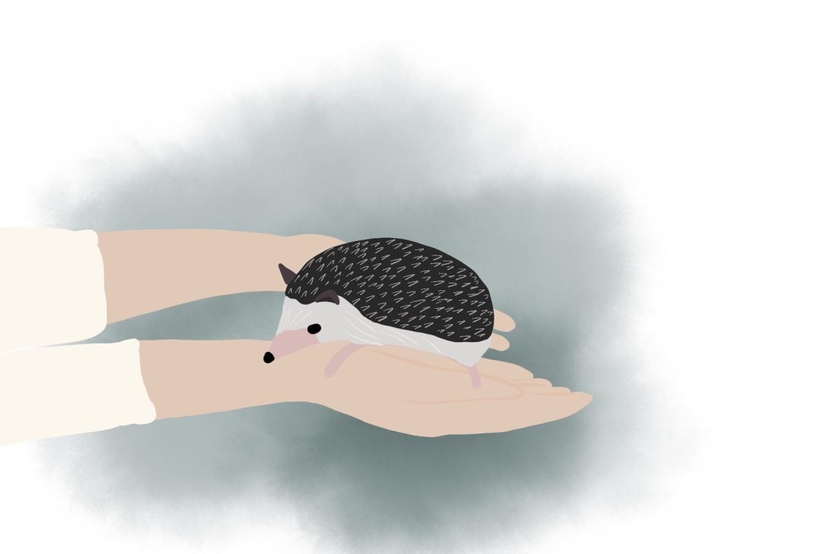 Hedgehog café inTokyo
